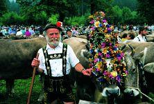 Allgäuer Viehscheid - Bild: Oberstorf Tourismus
