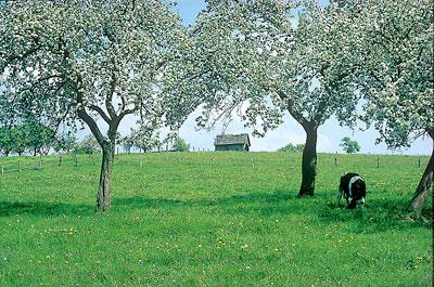 Bergisches Land - Landschaft mit Obstbaumblüte - Foto Nümbrechter Kur GmbH