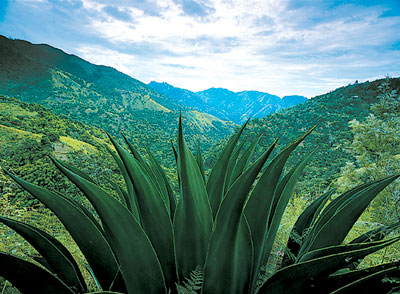 Jamaika - Blue Mountains- Quelle: Jamaica Tourist Board
