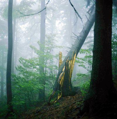 Šuma Nationalpark-bayerischer-wald